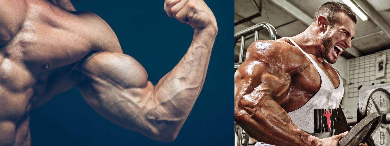 Рост мышц. Что влияет на рост мышц
