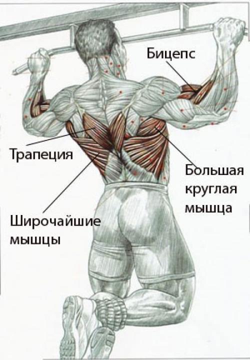 Подтягивания для расширения спины
